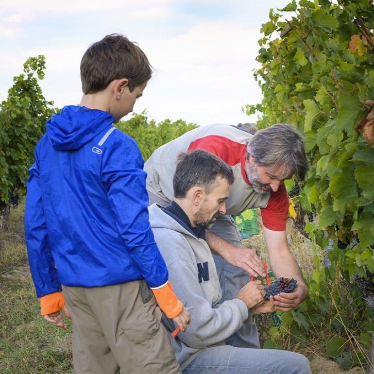 Vendanges touristiques ©Maison des Vins Fronton